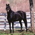 !horses blog!