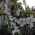 Méli-mélo de printemps
