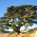 Liban, lieu saint que Dieu aime, aime-toi