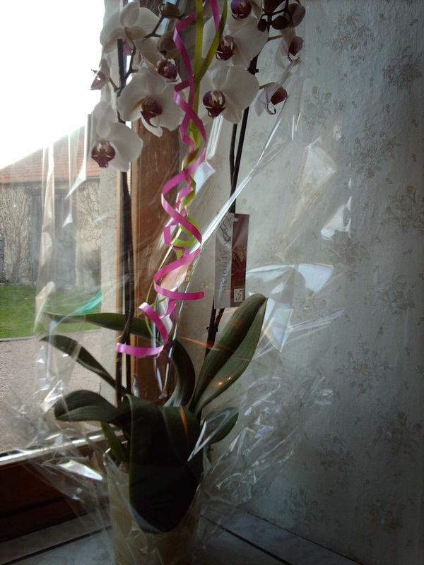Orchidée pour Mumu