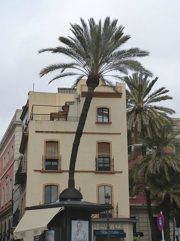 les palmiers de séville
