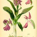 Nouveau lien : aquarelles de botanique