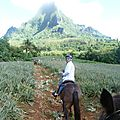 cheval moorea