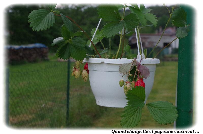 fraisier-4938