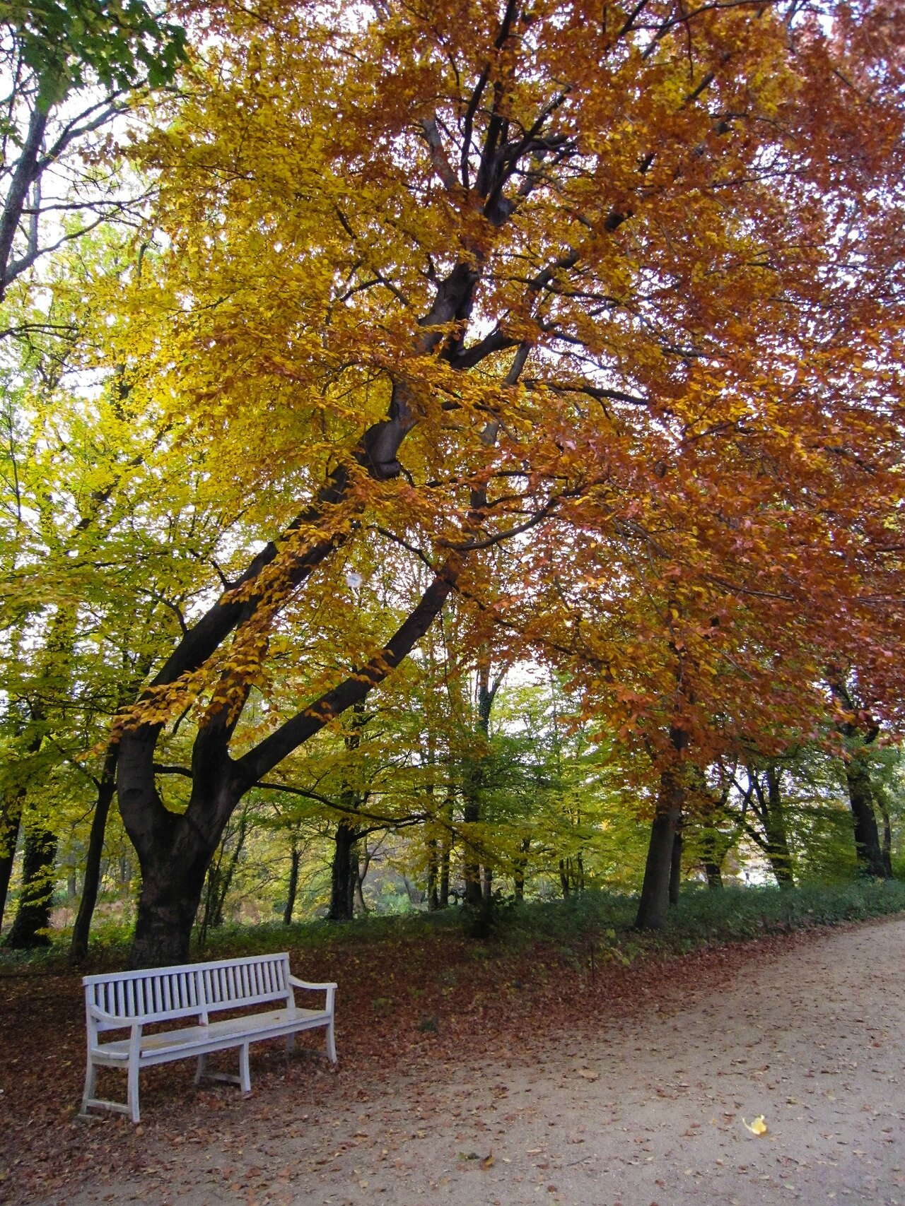 arbre parck