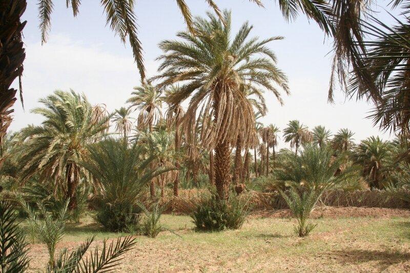 maroc 144