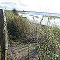 Le marais du Pommier Houesville 14 octobre 2012 015