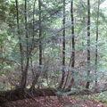 Mystères d'arbres 34