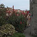 <b>San</b> <b>Vicente</b> de La Barquera (3)