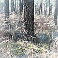 Sylvothérapie, ou le Bien-être par les arbres.