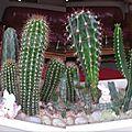 compo cactus 2