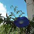 Mes fenêtres bleues