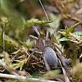 Première <b>araignée</b> de l'année * First spider of the year