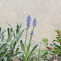 Célebrons le printemps #3