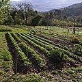 Le jardin partagé de Regain - début Avril 2012