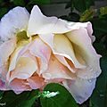 1-Mes roses 060517