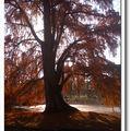 Balade d'automne