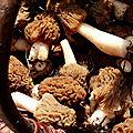 La photo du dimanche 26 avril 2015 : verpe de bohême & cie