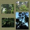 La forêt tropicale au nord de l'île