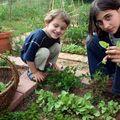 Le jardin des cerises vertes
