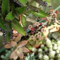Plantes de serre