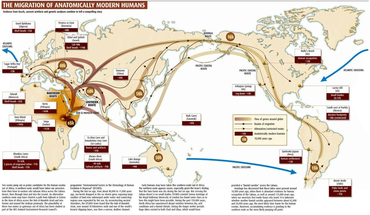 The Migration of Anatomically Modern Humans