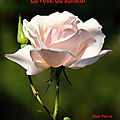 La rose du samedi N°<b>56</b> du 26-05-18