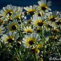 Composition florale ....