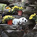 La Maison du Prince Gong - Un bébé panda sauvage !!!