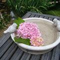 Tête d'hortensia dans le bain d'oiseaux...