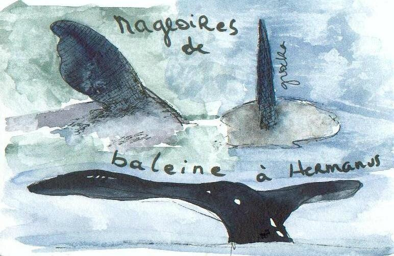 pattes-ailes-mageoires