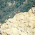 vautour IMG_9581