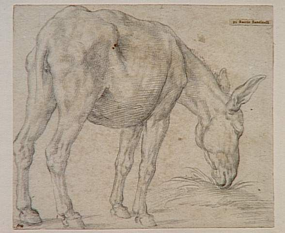 Bartolommeo Bandinelle, dit Baccio - Etude d'un âne debout paissant