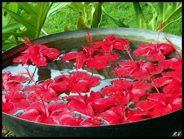 Hibiscus mirror