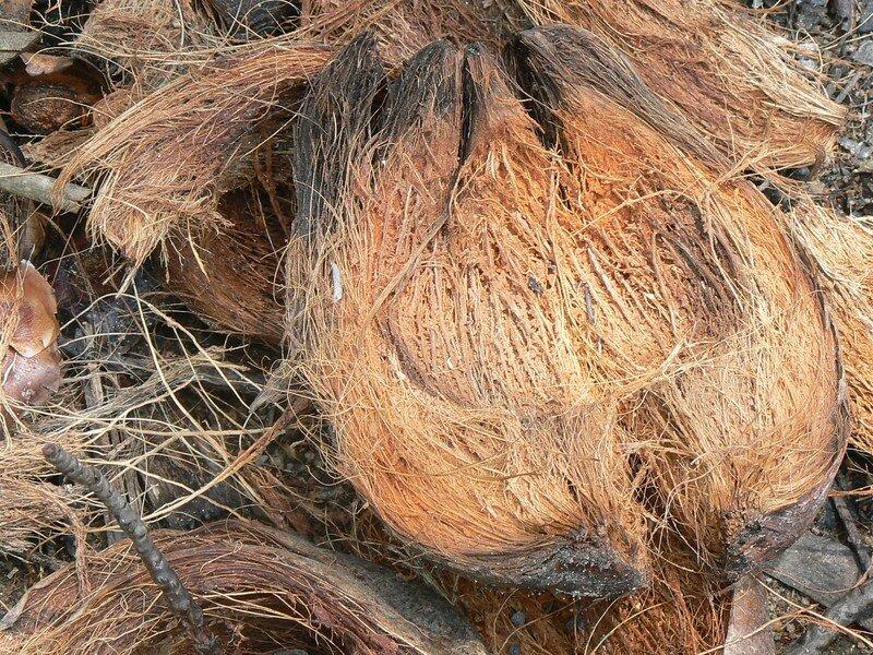 fibre de noix de coco