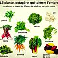 15 plantes potagères qui tolèrent l'ombre