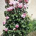 Des fleurs du jardin et des cousettes