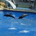 Au tour des dauphins de sauter maintenant!