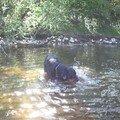 et non, Tango ne sais pas nager!