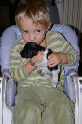 2007 08 bisous bb chien