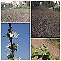 Fleurs du jardin (3)