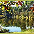 Arbres et reflets Lac Mimizan