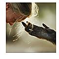 L'HISTOIRE DE LA <b>PROTECTION</b> <b>ANIMALE</b>