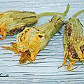 Fleurs de courgette farcies à la niçoise