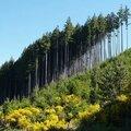 Quizz forestier