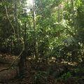 paysage de jungle