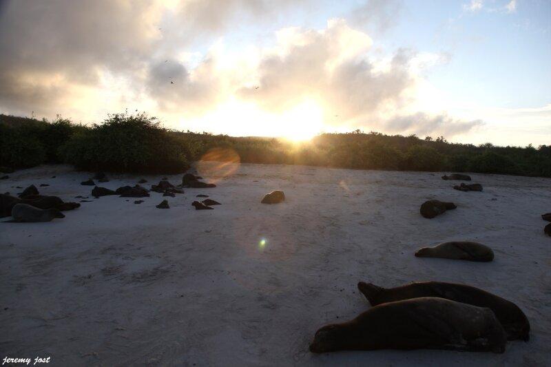 sunset santa fe & sea lions