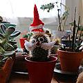 Cactus de