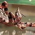 Pixel chassant le <b>diplodocus</b>