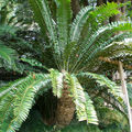 8682-Jardin-tropical
